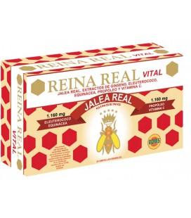 Jalea Reina Real Vital 20 ampollas